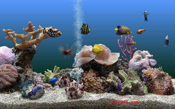 热带鱼时钟屏保 V3.3下载