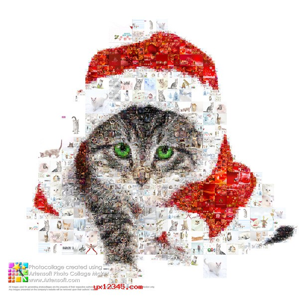新年小猫照片拼贴效果