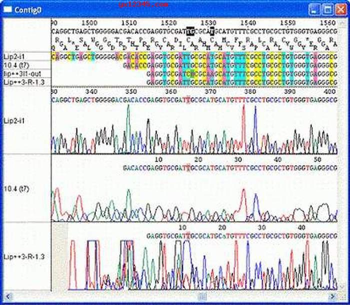 DNA测序图谱浏览效果截图